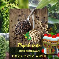 BANTAENG_DAPATKAN: 0823*2292*4990. Harga Pupuk Organik Lada Sulawesi