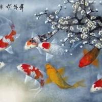 Harga Gambar Ikan Koi Travelbon.com