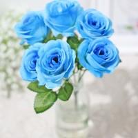 Unduh 98+ Wallpaper Bunga Mawar Biru HD Terbaru