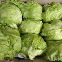 Sayur Lektus ( Lettuce Head )