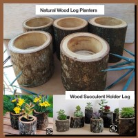 Natural wood log planters succulent pot vas bunga kayu kaktus