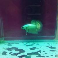 Harga Gambar Ikan DaftarHarga.Pw