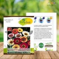 Benih-Bibit Bunga Krisan Rainbow Mix - Haira Seed