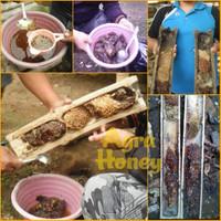 Harga madu klanceng lanceng trigona kelulut itama 300 gram asli   Pembandingharga.com