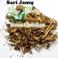 Harga jamu herbal tradisional tanaman daun ciplukan 500 gr untuk | Pembandingharga.com