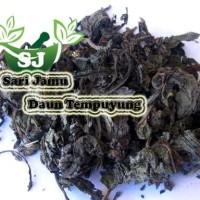 Harga jamu herbal tradisional daun tempuyung 250 gr untuk batu | Pembandingharga.com
