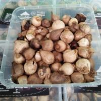 Bawang Hitam Tunggal Lanang 500 grm ( Black Garlic)
