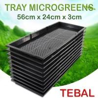 Tray semai pot bibit pembibitan microgreens wheat grass sprout TEBAL