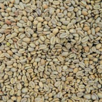 Green Beans Kopi Ethiopia Misty Valley (1 kg) Specialty Grade