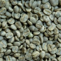 Green Beans Kopi East Timor (1 kg) Specialty Grade