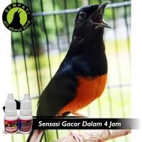 Harga Suara Burung Gacor Travelbon.com