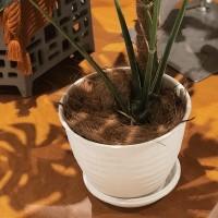 Tatakan Pot / Tray Pot Putih Cocok Untuk Indoor Tidak Becek dan Kotor