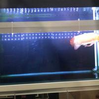 Jual Lampu aquarium LED HIPOWER utk tanning arwana,louhan,aquascape Murah