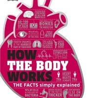 How the Body Works (by DK Publishing ) - eBook