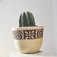 Deskplant_Cactus Belimbing_Kaktus Koboi_Cereus peruvianus