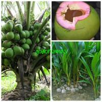 Bibit kelapa wulung super