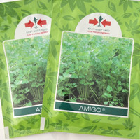 Benih Bibit Seledri AMIGO (Cap Panah Merah)