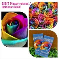BIBIT BENIH BUNGA MAWAR PELANGI RAINBOW ROSE IMPORT