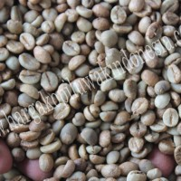 Jual Biji Kopi Luwak Hitam Green Bean 500g Murah