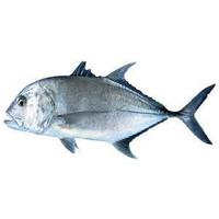 Foss Seafood Ikan kuwe / kue Bongkok Frozen (beku) size 500gr-1kg