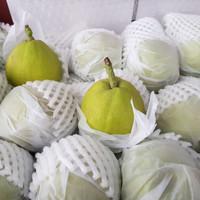 Buah Pear Xiang Lie Premium Fresh Import Grosir