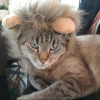 Wig untuk Kucing (Lion Mane)