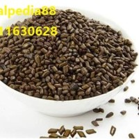jue ming zi Cassia seed Semen Cassiae 600 gram