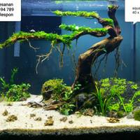 Jual Jasa Setting Design Dekor Aquarium Aquascape Natural Ukuran Kecil Jakarta Pusat Aqua Design Juragan Tokopedia