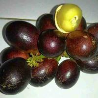 biji benih buah matoa fruit