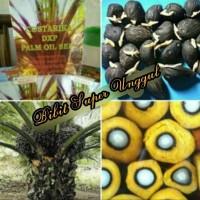 Bibit Polong Sawit Costarika atau Kostarika Import Malaysia