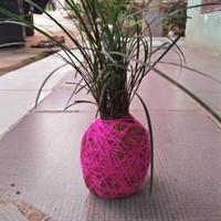 tanaman kokedama kucai / tanaman hias kucai