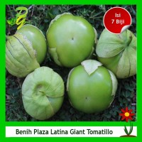 Benih Ciplukan Jumbo Plaza Latina Giant Tomatillo - Isi 7 Biji