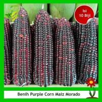 Benih Jagung Ungu Maiz Morado Purple Corn - Isi 10 Biji