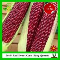 Benih Jagung Red Sweet Corn - Ruby Queen Isi 10 Biji