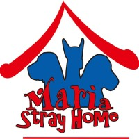 DOG FOOD/CAT FOOD/RAW FOOD/TURKEY- BARF/SUPPORT 4 SHELTER MARIA STRAY