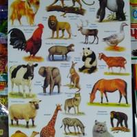 poster hewan