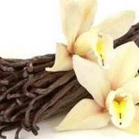 Hot Promo Bibit Parfum Vanilla Fragrance Oil (100 Cc) Promo