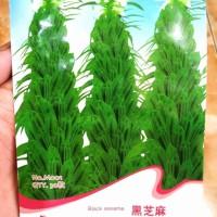 Benih Biji Bibit Bunga Wijen (Sesame) merk Flower Goddess