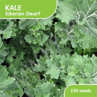 150 Seed - Benih Kale Siberian Dwarf Import