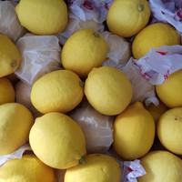 Buah Lemon Import Citrus Premium Fresh Per Dus