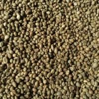 Jual GreenBean Robusta biji kopi Lanang / peaberry 80% grade 1 Lampung 1kg Murah