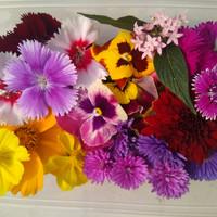 BIG mix edible flower- komplit 12macam bunga