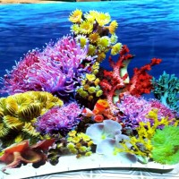 Background Aquarium Bolak-balik Tinggi 50 cm