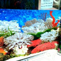 Background aquarium tinggi 30cm bolak balik