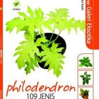 Serial Galeri Eksotika : Philodendron 109 Jenis
