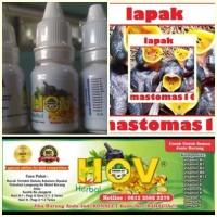 herbal omega vit hov vitamin bikin burung gacor berstamina