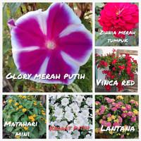Paket murah biji benih bunga