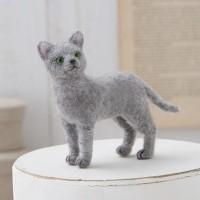 Harga Russian Blue Cat Travelbon.com