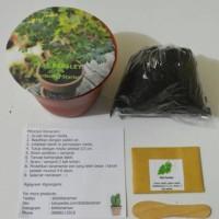 Gardening Starter Flat Parsley