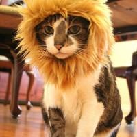 Bold Lion Hair